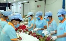 Trung Quốc tăng mua, trái cây Việt Nam lên giá