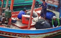 Khai thác thủy sản đầu năm: Ngư dân Cà Mau ấm áp mùa Tết biển